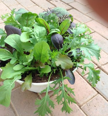 Herbs & Vegetable Plants
