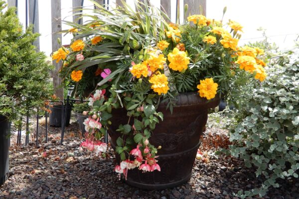 preplanted container