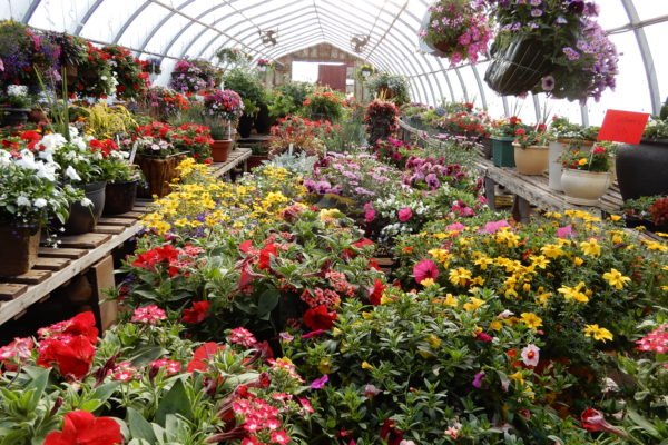 greenhouse full of colour