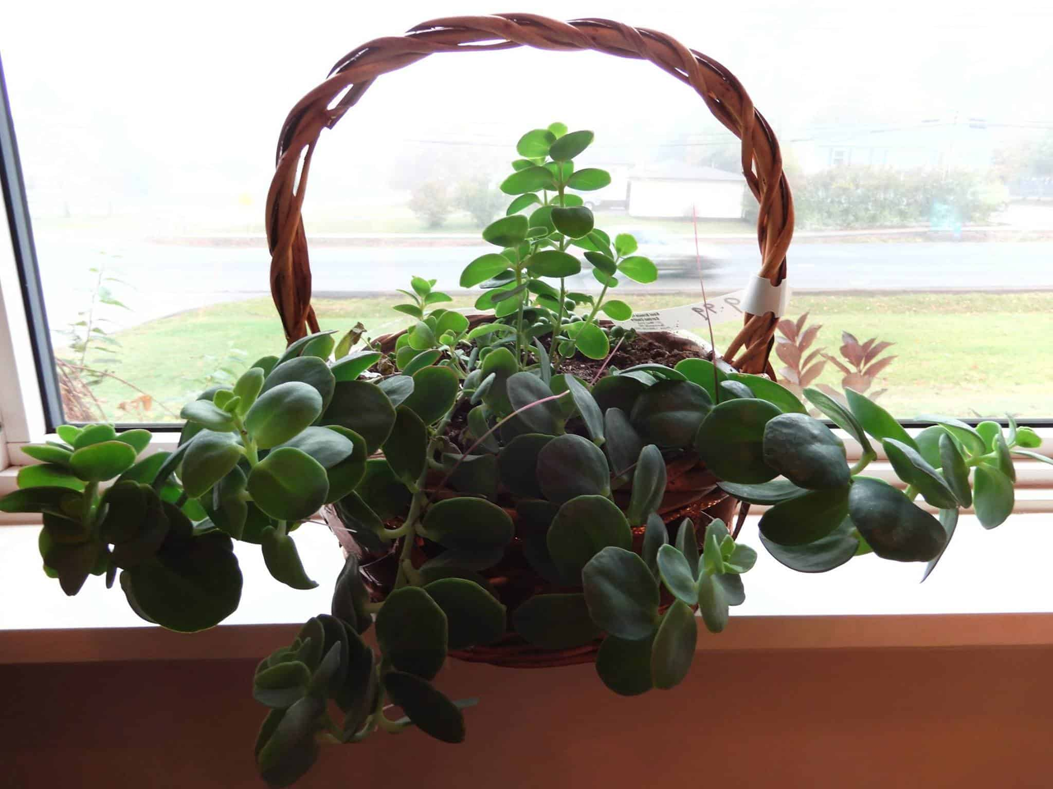 picture of Indoor Plants in a basket