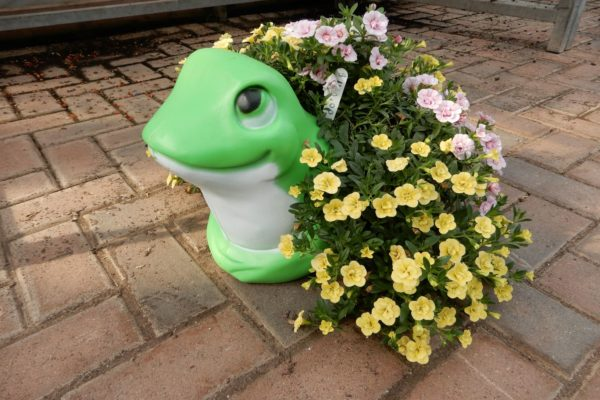 preplanted frog container.JPG web