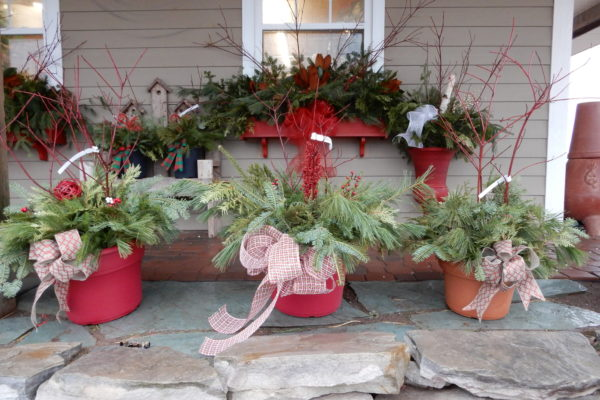 preplanted Christmas containers