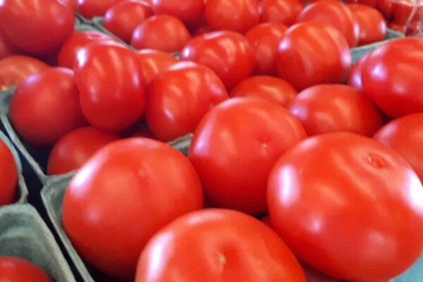 tomatoes schurmans aug 24 2020