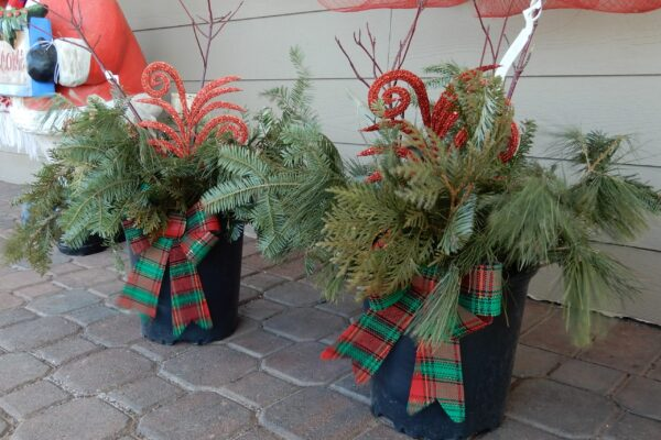 Winter pots containers Christmas