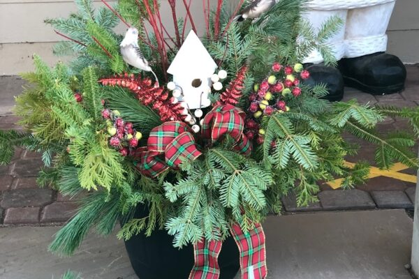 preplanted Christmas container 2