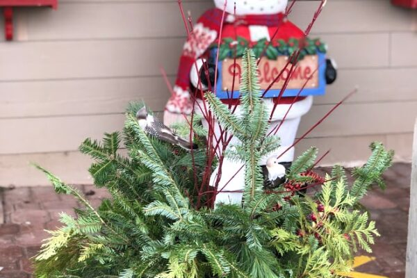 preplanted Christmas container 3
