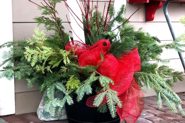 preplanted Christmas container 6